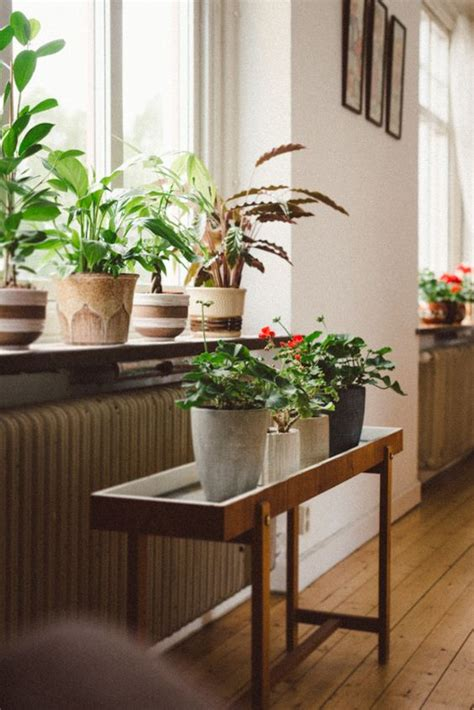 what is the feng shui of plants in the bedroom girlfriend is better