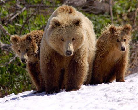 imagenes animales en hermosas fotos de animales en la selva hd imagenes