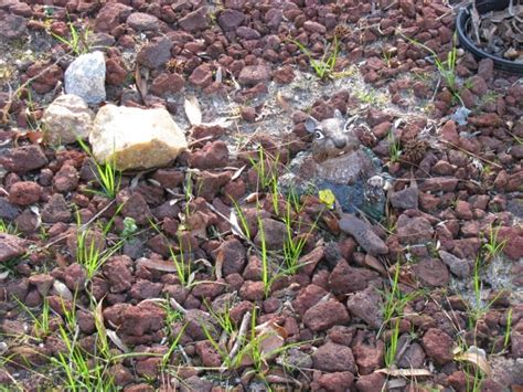 how to start a rock garden how to start a rock garden starting a rock garden corner