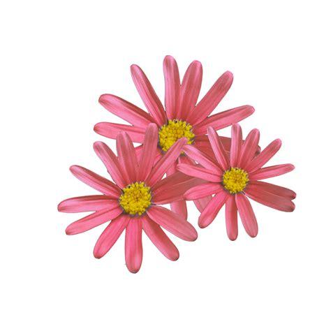 imagenes tumblr png para descargar w arte pop palavras de flores do corel photo paint
