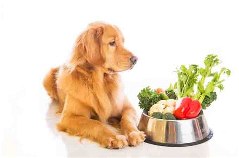 cancer diet for dogs 5 best supplements for your dogtime