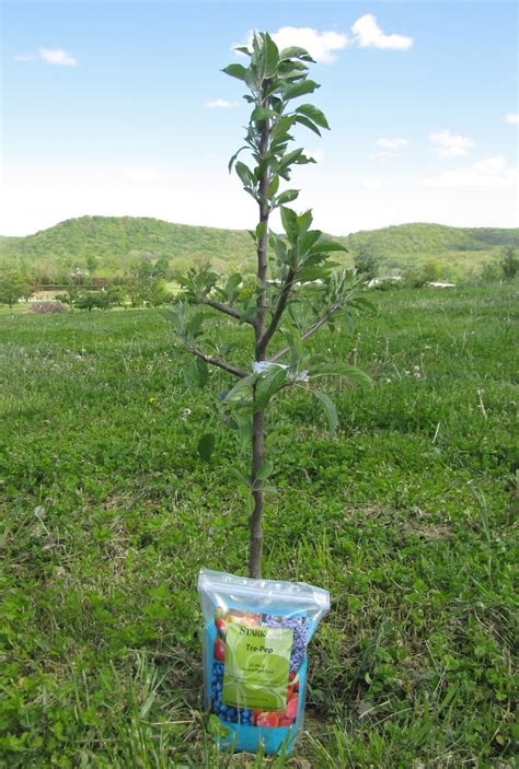 fertilizer for fruit trees how to fertilize new fruit trees stark bro s