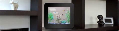 aquarium design sans entretien philippe couzinier d 233 couverte d aquariums tendances