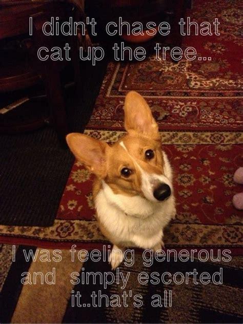 Corgi Meme - corgi meme www imgkid com the image kid has it