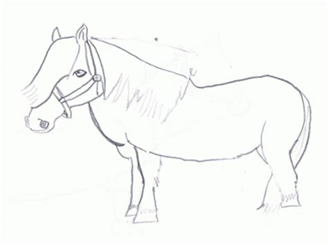 shetland pony coloring pages horse coloring pages printable shetland pony page