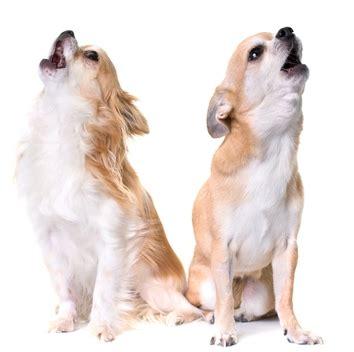 how to get a puppy to stop at how to get a to stop barking 5 most effective methods