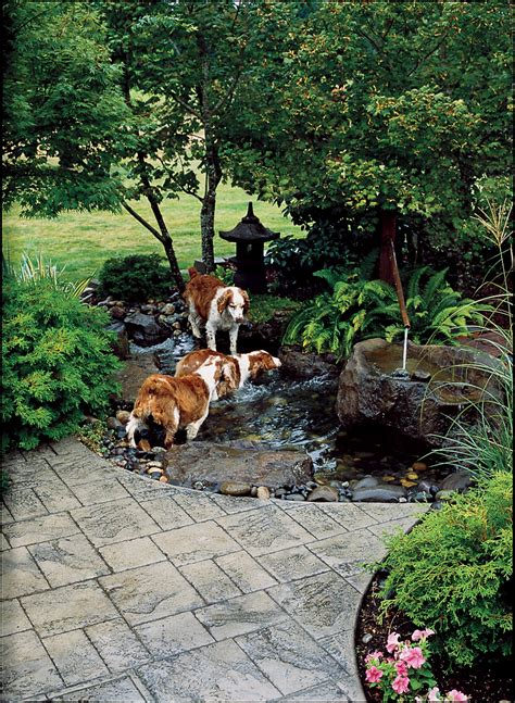 provide dogs access to water backyard ideas for dogs backyard ideas for dogs sunset
