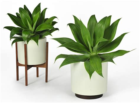 indoor plant pot case study cylinder plant pot with stand modernica pot