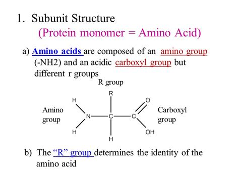 protein monomer i the structure and function of macromolecules ppt