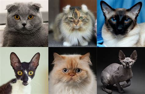 types of cats different type of cats what of cats are you