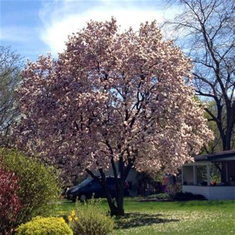 lada con ventilatore home depot magnolia 28 images home depot magnolia 28