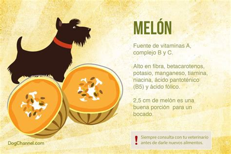 are apples ok for dogs 13 deliciosas frutas que puedes compartir con tu perro