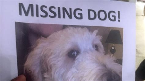 missing why dogs go missing and how to find them books goes missing in hamilton after being put on wrong