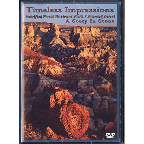 amidst the stones of books timeless impressions a story in petrified forest