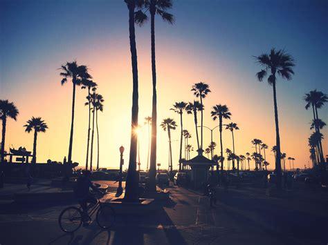 California Palm best 25 california palm trees ideas on summer