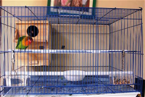 Sangkar Burung Kecil By A D Bird cara membuat kandang sangkar burung lovebird dengan mudah