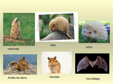 imagenes de animales que hibernan adaptaciones de los animales