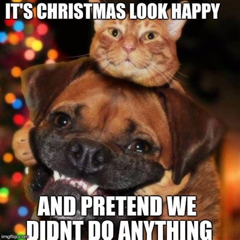 Christmas Dog Meme - holiday dog meme pictures to pin on pinterest pinsdaddy