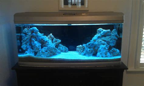 saltwater fish aquarium setup aquarium design ideas