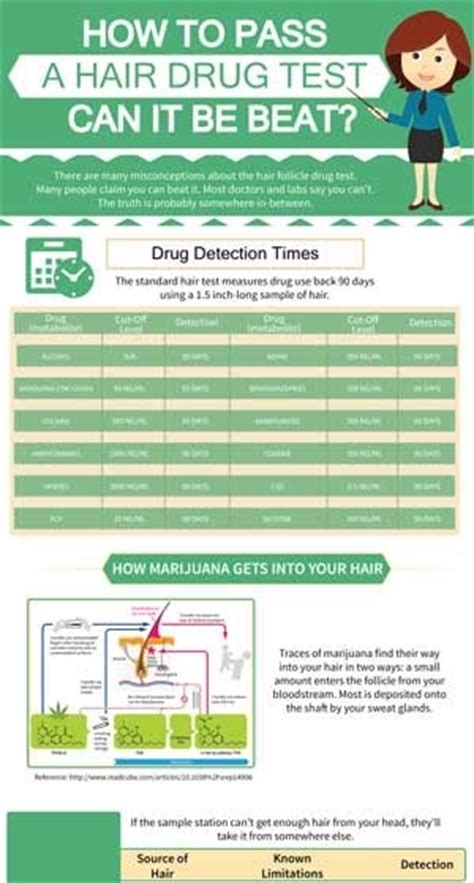 how to pass a hair test infographic