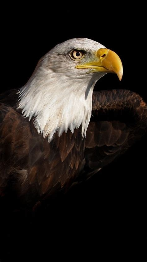 Wallpaper For Iphone 5 Eagle | bald eagle iphone 6 6 plus and iphone 5 4 wallpapers