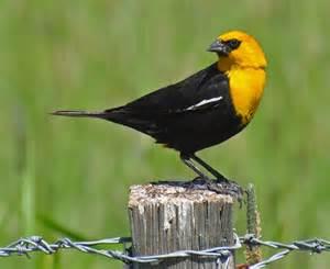 oregon birds billzine