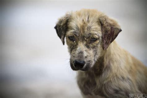 imagenes de animales jpg perros callejeros 26 junio 2013xg5 doctor pulgas