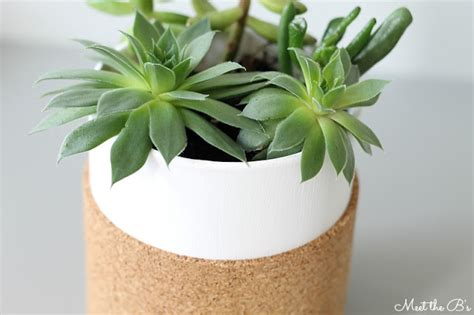 cork succulent planter diy cork wrapped succulent planter monthly diy challenge