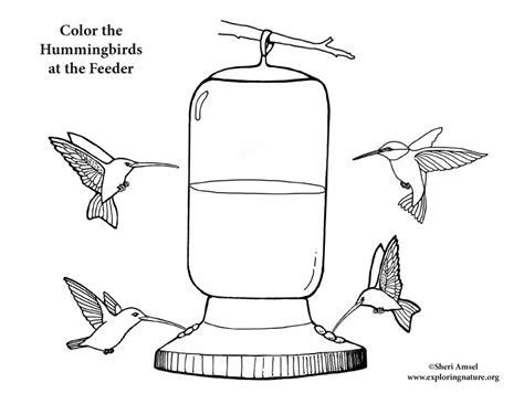 coloring page bird feeder hummingbirds at feeder coloring page
