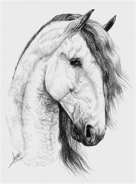 caballo a lapiz dibujos de animales retratos a lapiz de caballos imagui