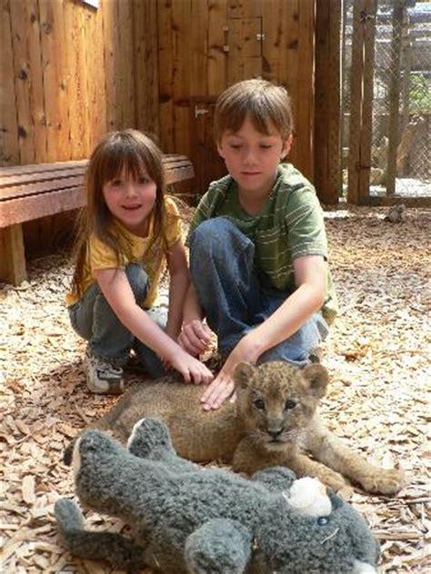 forest wild animal best blog wild animal park bandon