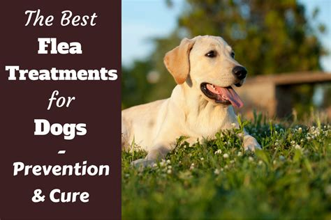 what is the best flea treatment for dogs what is the best flea treatment for dogs