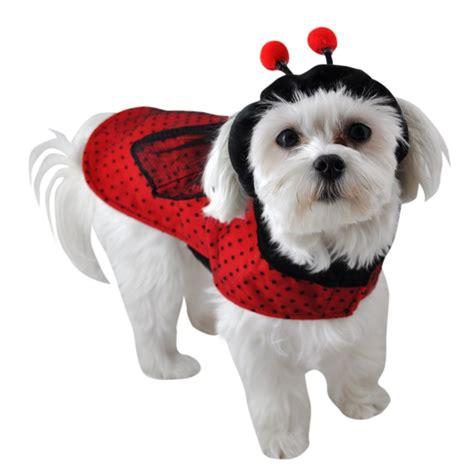 ladybugs in dogs ladybug costume