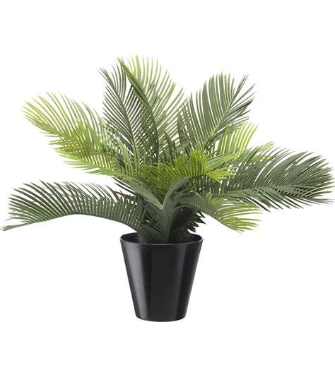 En Pot Exterieur by Palmier Exterieur En Pot Pot Pour Palmier