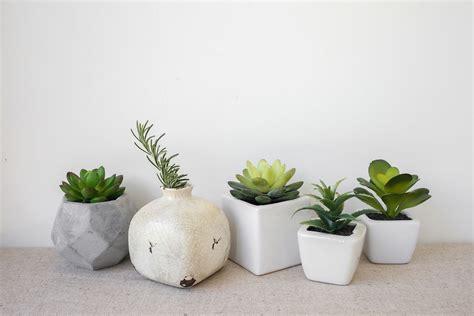 decorar rincon con plantas plantas para decorar tu casa hogarmania