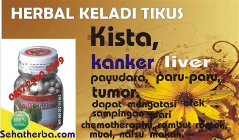 Herba Benalu Tea tumor herbal alami thibbun nabawi