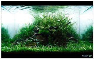 membuat rumput aquascape news tips mempercantik aquarium dengan cara aquascape