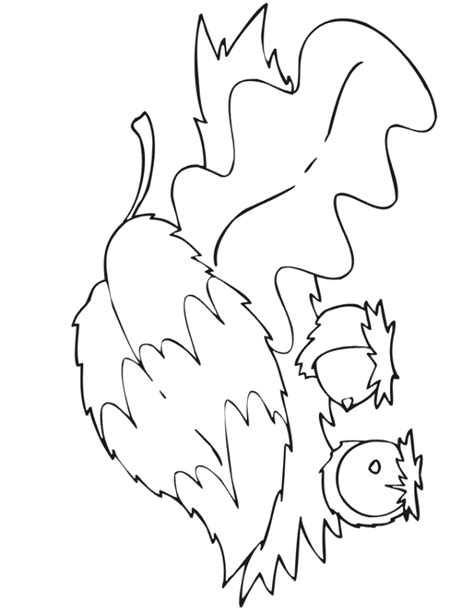 coloring page of an acorn acorn coloring pages for kids coloring home