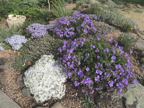 the greatest rock garden plants