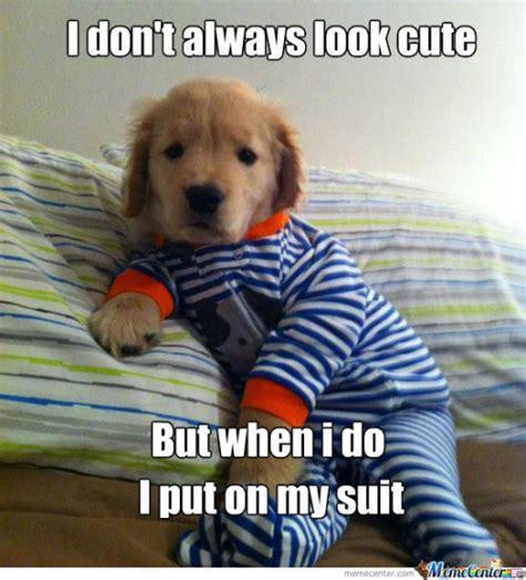 Puppies Memes - pup memes oldpups