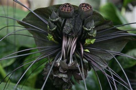 creepy plants barnorama