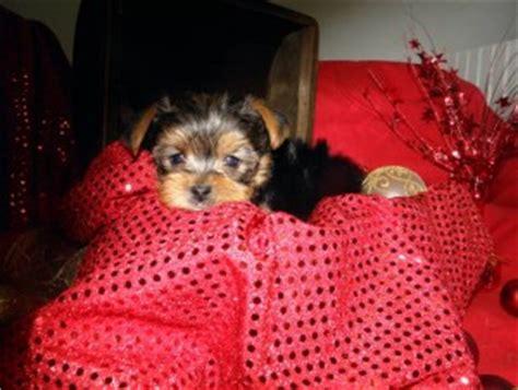 puppies honolulu dogs honolulu hi free classified ads