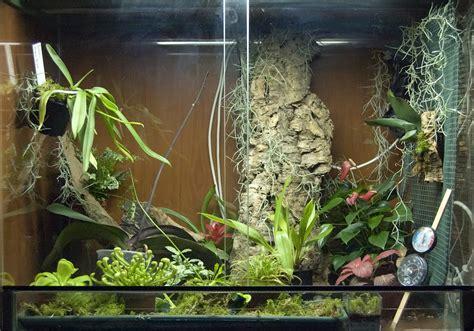 manutenzione orchidee in vaso serra calda 80x50x60 con orchidee piante carnivore e