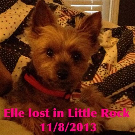 yorkie rottweiler mix 17 best images about arkansas us lost registry on rottweiler mix