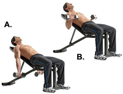 incline bench exercises bicep exercise bicep curl and its variations no