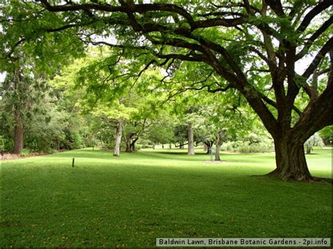 Botanical Gardens Brisbane City Disc Golf Thebestofbrisbane