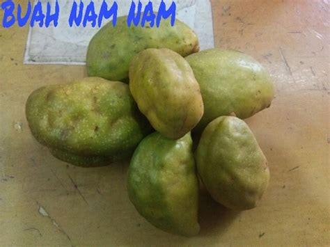 gambar jual bibit tanaman buah nam kopi anjing lapak hgs