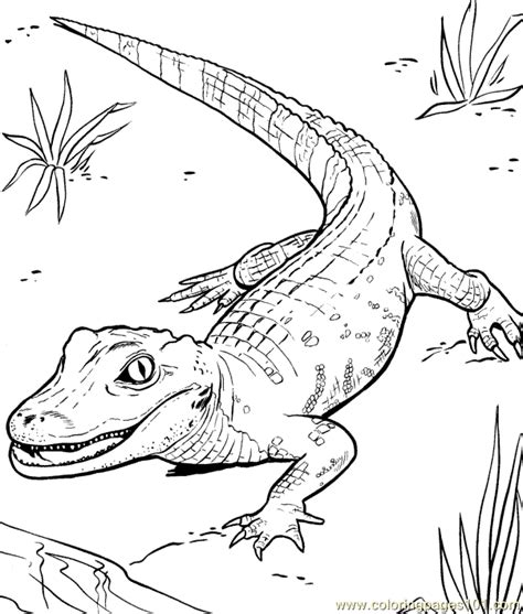 printable reptile images free coloring pages of reptiles and hibians