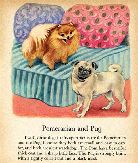 pomeranian and pug pomeranian and pug print tibor gergely illustration bernard children s