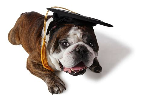 puppy graduation a canine citizen certificate for homeowner insurance realtor 174